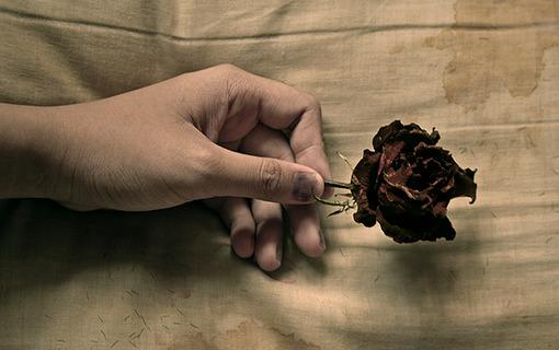 或许你会想起我,就像想起一朵不重开的花朵