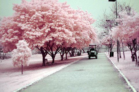 我在桃花树下等失恋