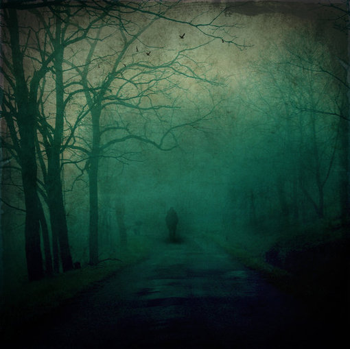 SeSSiZ_KaLDiM_ARDiNDaN____by_day_light、树、雾、安静、风景