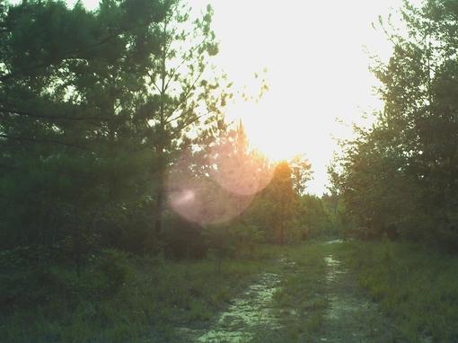 untitled、高清、异域风情、阳光、森林