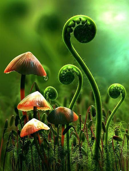 我可以蹲下来,陪你做一只蘑菇