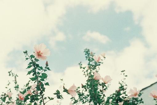 夏天在安静的流淌、清新、小清晰、我亲爱的偏执狂小姐、暧昧