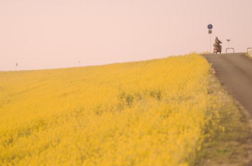 夏天在安静的流淌、清新、唯美、意境、稻子