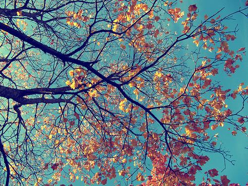 黄叶、Autumn、DREAM、warm heart、the earth